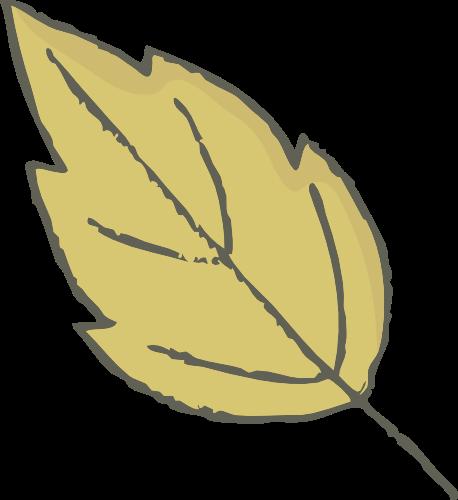 叶子 树叶